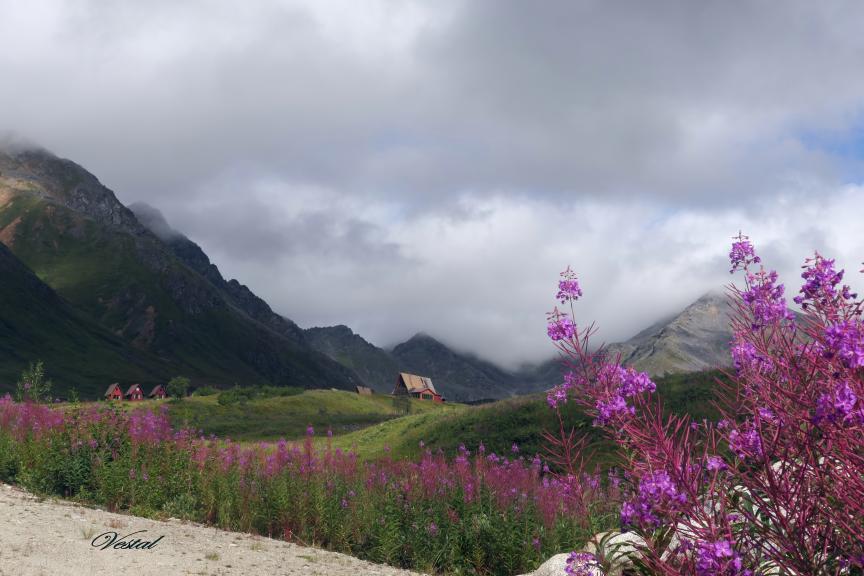 fireweed-at-hatcher-pass-lodge