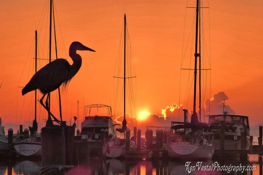 Heron Sunrise -- 2x3 ratio